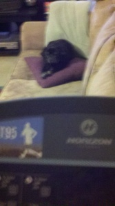 sorry for the blurry pic, but I was on a treadmill, unlike the pug